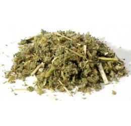 Horehound cut 1oz (Marrubium vulgare)