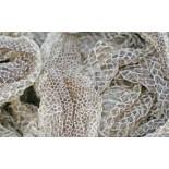 Snake Skin Shed